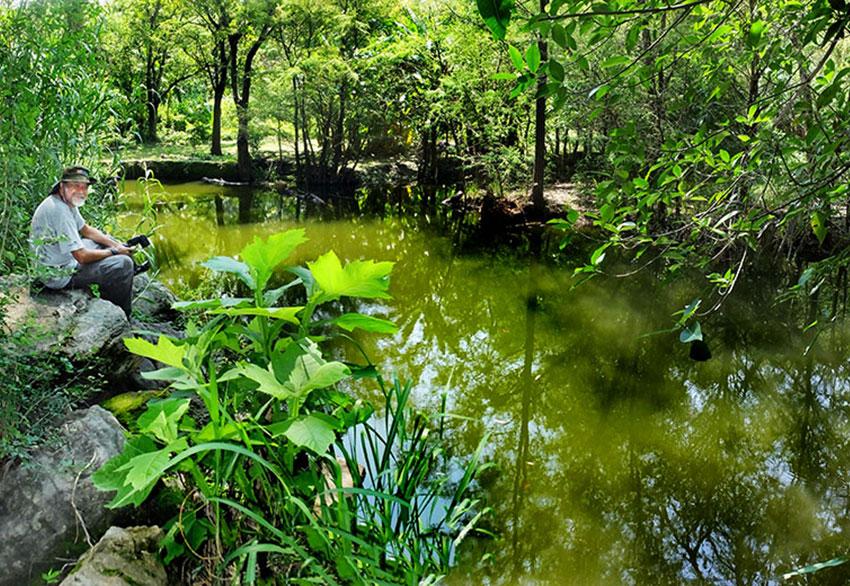 La presa o presa es un buen lugar para ver libélulas, luciérnagas e insectos gigantes de mezquite.