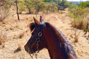 On her horse Pico, Kerry of Chapala is part of a sort-of virtual 100-mile horseback ride.