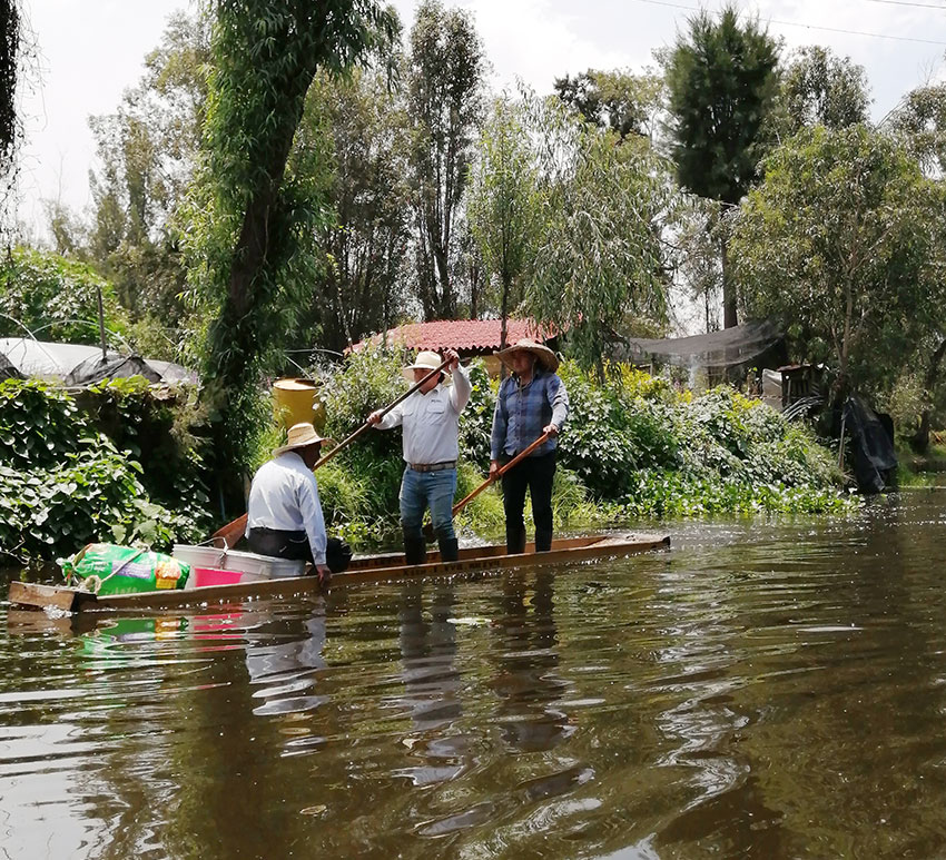 Abejas de Barrio is one of the few beekeeping projects in Mexico City's southern canals.