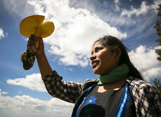Bautista and a mushroom of the high Mixteca region of Oaxaca.
