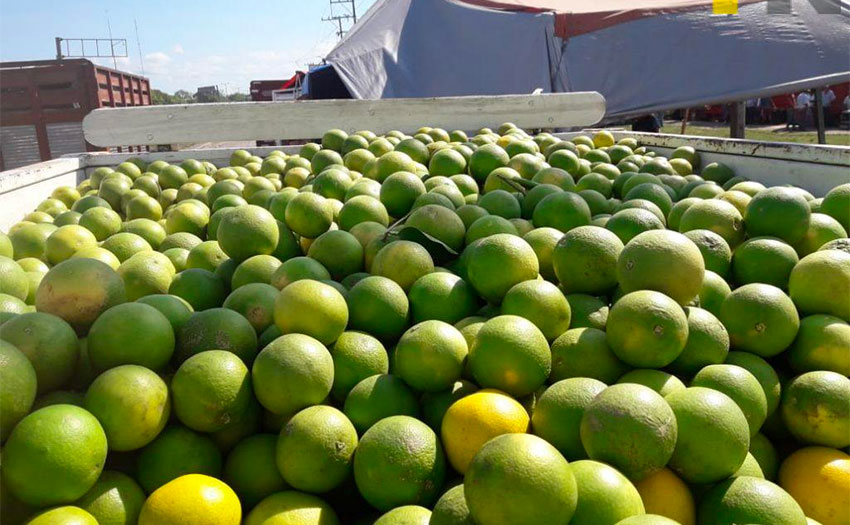 More than half of Mexico's orange harvest comes from Veracruz.