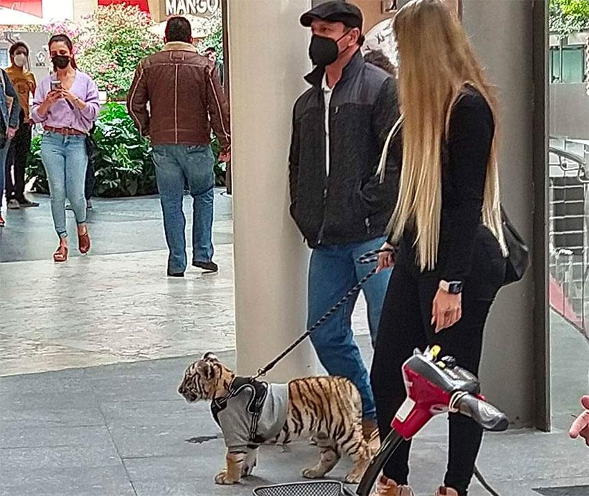 Woman walks her tiger in Polanco.