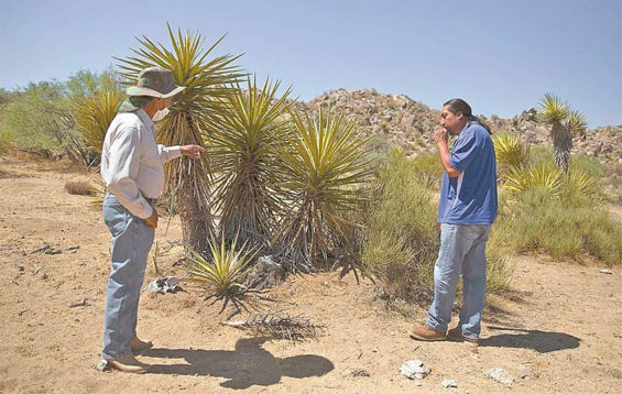 Stealing yucca has increased in the last two years, say communal landowners.