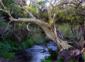 5—–GR-Carmenza-Suarez-in-Amate-Tree