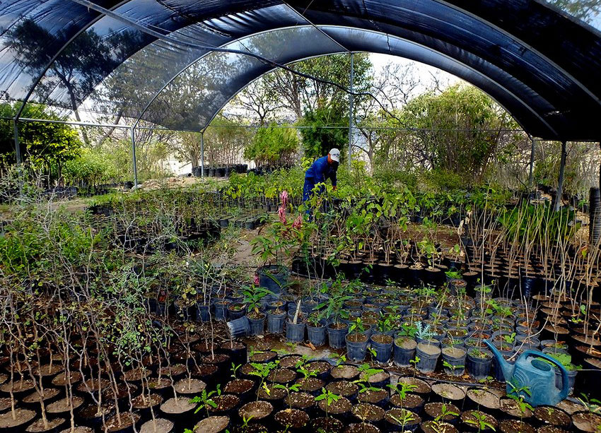 Researchers can visit the Huentitán Botanical Garden to gain access to rare species from around the world.