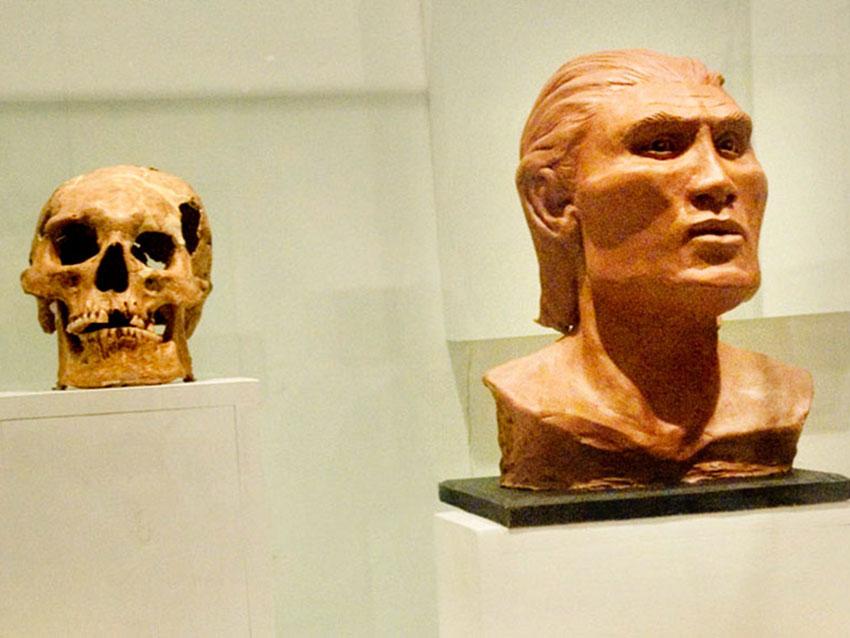 7—–f-sm-reconstructed-skull-Mascota-Museum