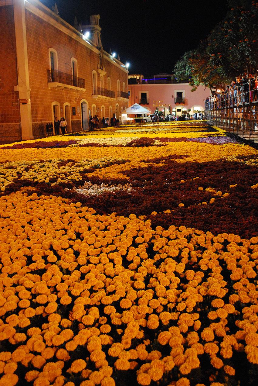 Una alfombra de flores para las celebraciones del Día de Muertos en Atlixco, Puebla