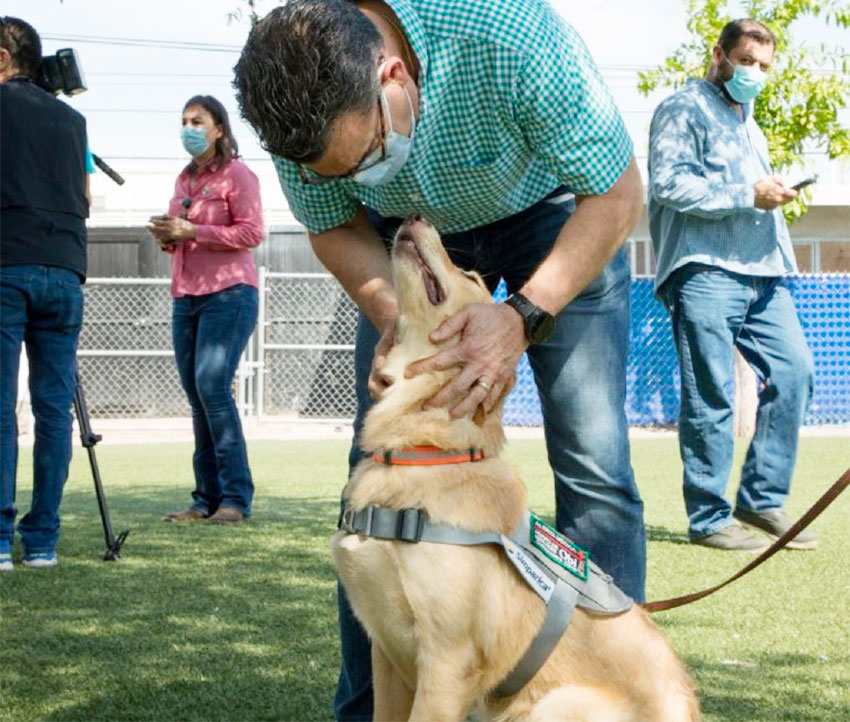 Trainer Sergio Castilla and one of the dogs learning to detect Covid-19.