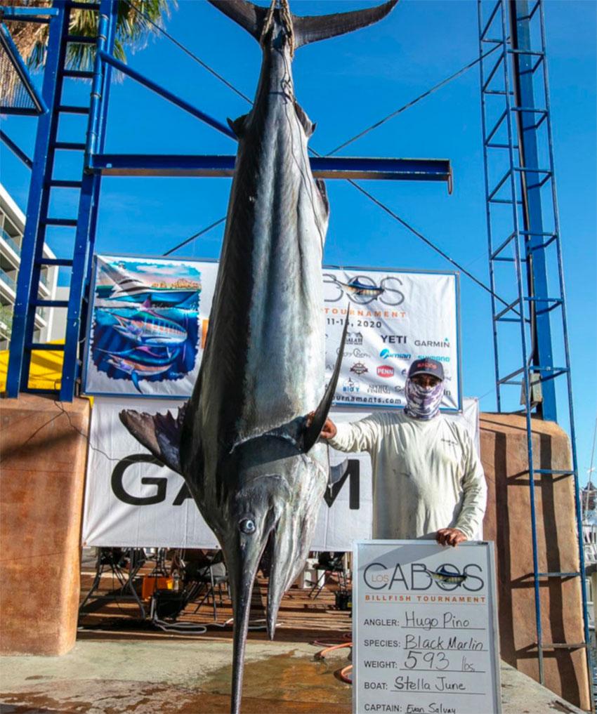 Marlín negro de 268 kilogramos de Hugo Pino.