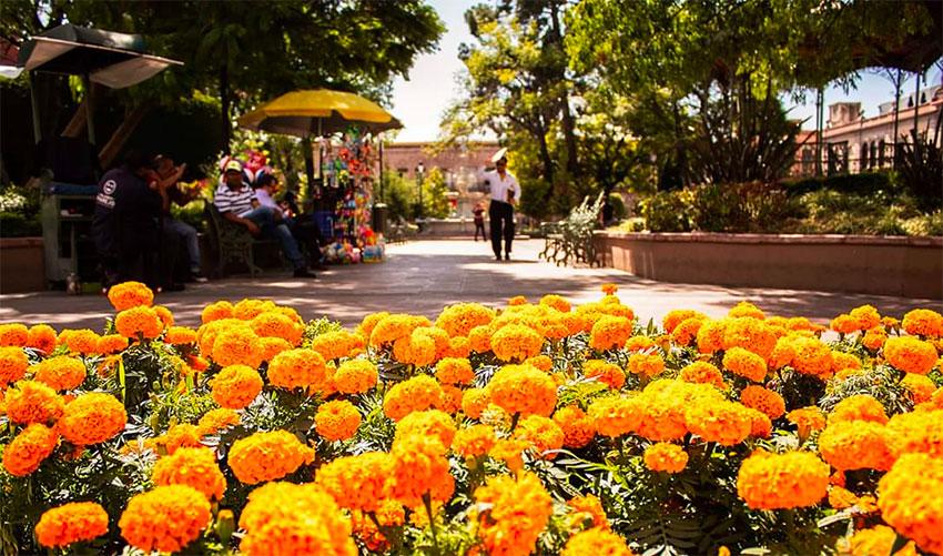 Las maravillas añaden color al centro histórico de la ciudad.