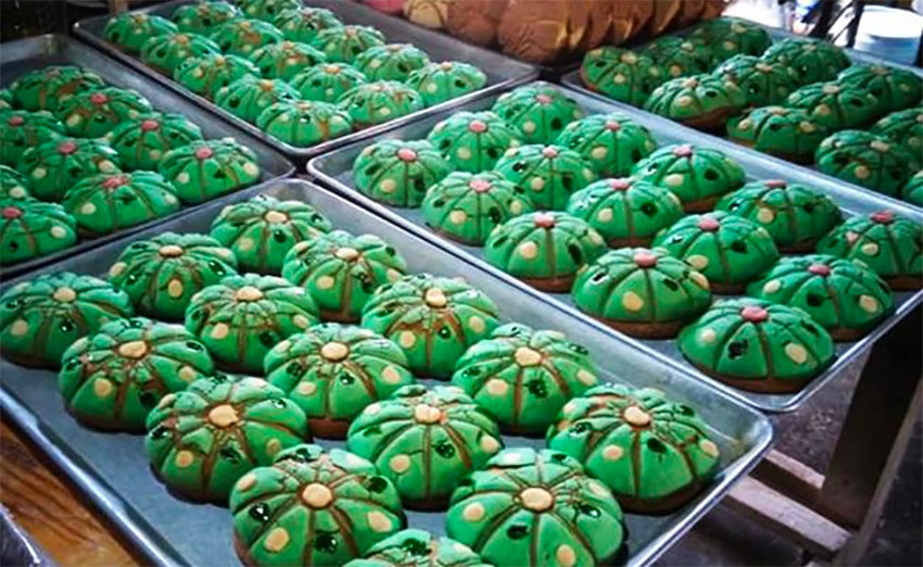 The peyoconchas resemble the buttons that are the crown of the peyote cactus.