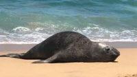 A dead sea lion on Baja California Sur beach.