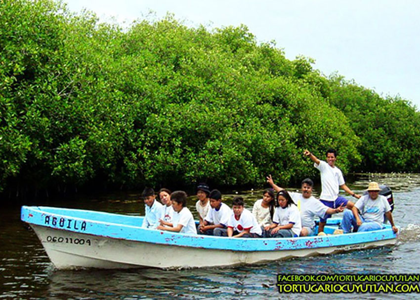 A panga (skiff) ride among the Palo Verde Estuary's mangroves.