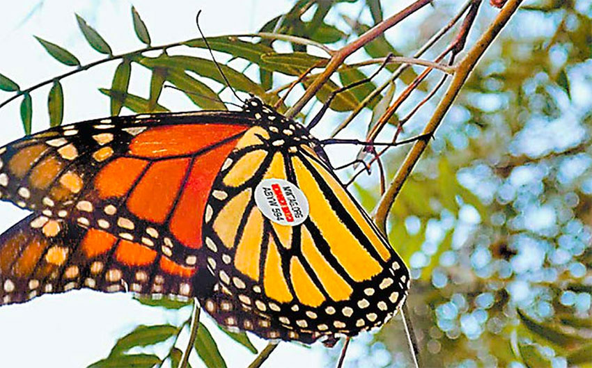 The butterfly in Guanajuato