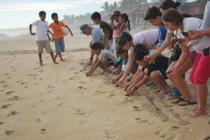 Turtle release by visitors in Playa Ventura, Guerrero.