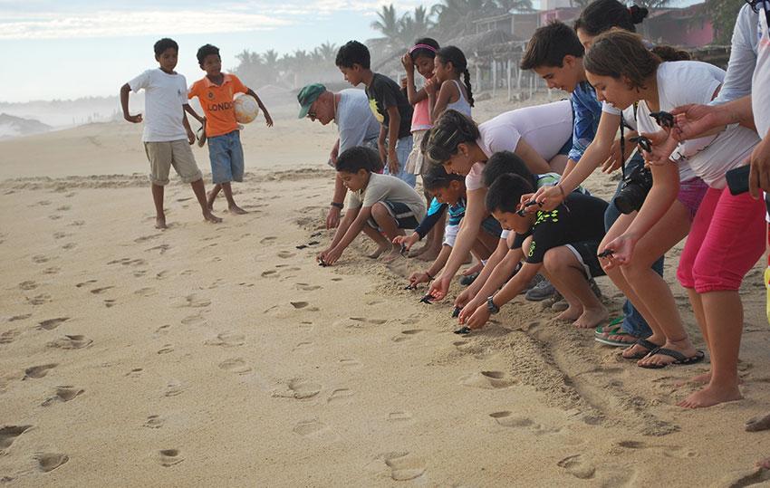 Turtle release by visitors in Playa Ventura, Guerrero.