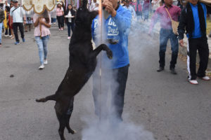 In Mexico, even dogs are fans of cohetes.