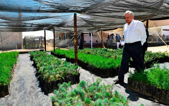 lopez obrador in tree nursery