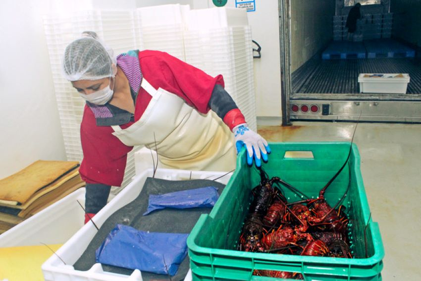 Preparing shellfish in Bahia Asunción, Baja California Sur. Aldo Santoro