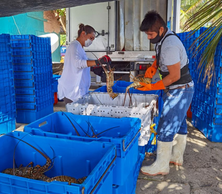 Processing a catch in Quintana Roo.