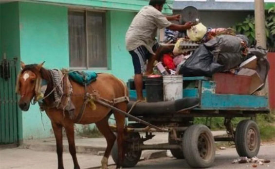 A horse-drawn garbage cart in Ecatepec.