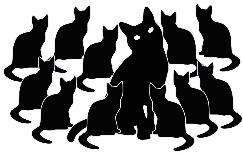 One unspayed mother cat can produce an astonishing 150 kittens in her lifetime, with most not living for more than a few months.