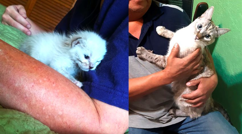 Indiana then and now: forget adopting her. My husband might part with me before he parts with her … maybe.