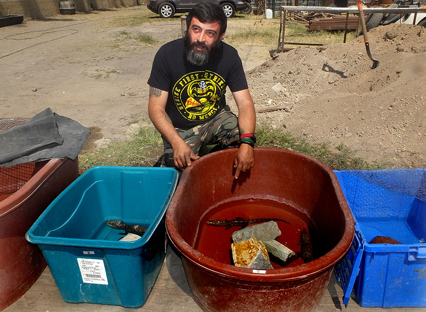 Alberto Cayo with unwanted baby crocodiles received during the last week.