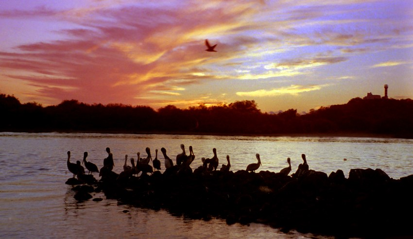 Pelicans gather to watch the sunset at San Blas.