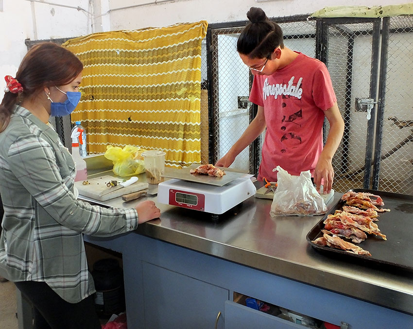 Preparing high-quality meals for the animal residents of the wildlife center.