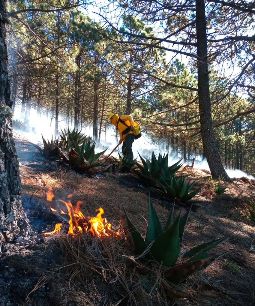 A firefighter at work at one of 61 active fires burning in Mexico.