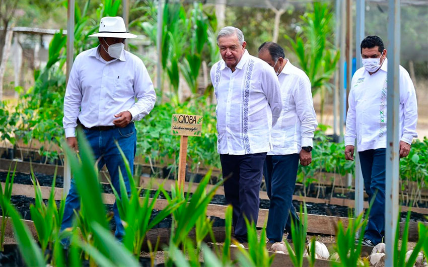 The president, center, inspects a tree nursery growing saplings for the tree-planting program.