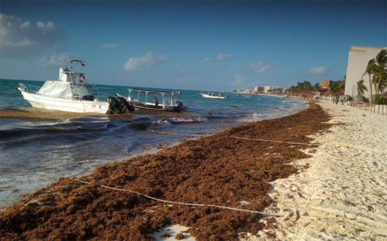 sargassum on a Quintana Roo beach