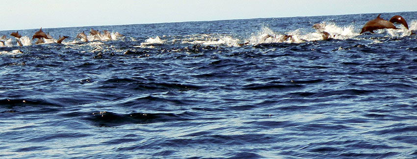 Frolicking dolphins are often seen from Platanitos Beach and points to the north and south.