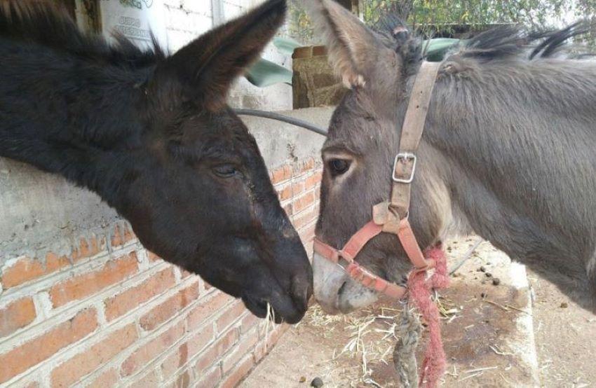 A bonding moment between Burrolandia's residents.