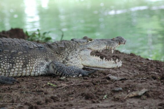 The writer had a simple idea to bring this and other Mexican crocodiles to television fame, but the execution of said idea was harder than expected.