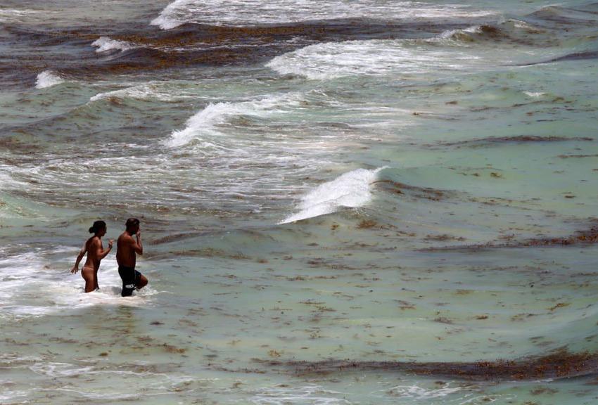 Los turistas en Playa del Carmen se divierten en el agua del mar, aunque el Sargassum nada a su alrededor hasta la costa.