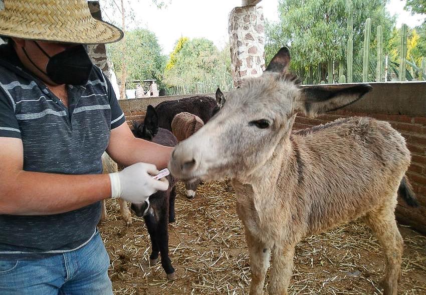 Checking on the donkeys at Burrolandia.