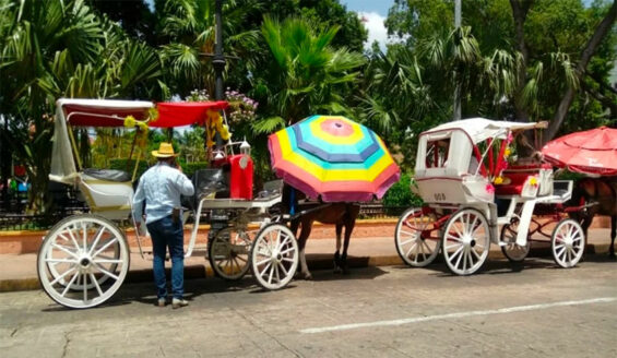 Horse-drawn carriages in the Yucatán capital.