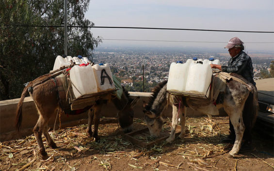 Donkeys deliver water in Mexico City.