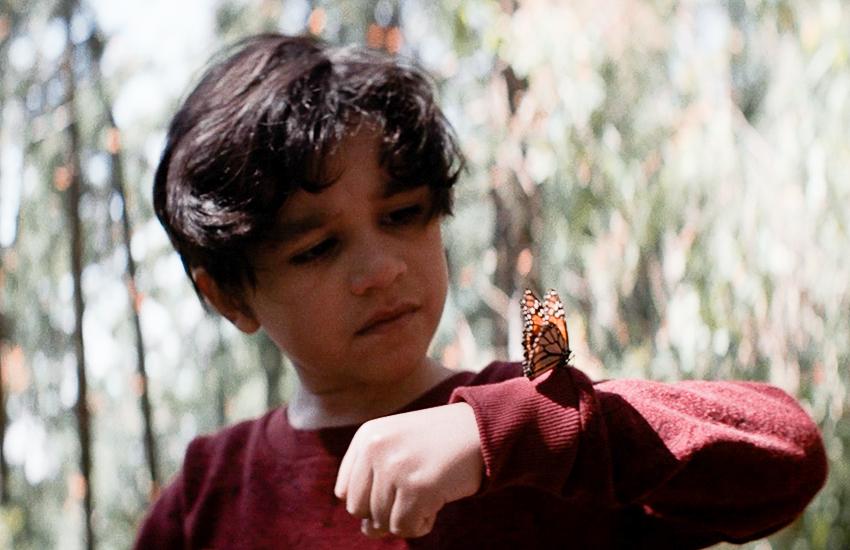 Still from Son of Monarchs film