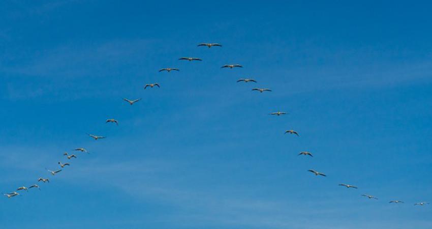 wood storks at Pantanos de Centla, Tabasco