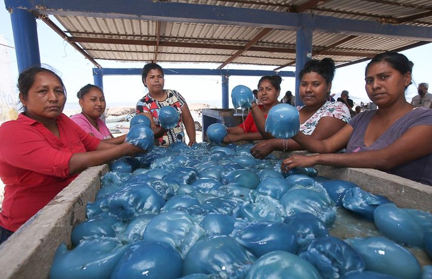 Yaqui fisherwomen in Guaymas, Sonora
