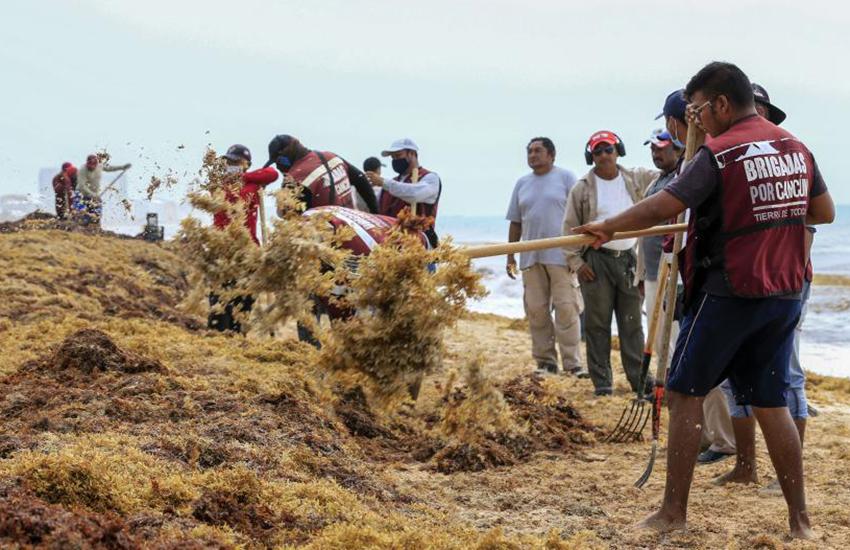 Brigades collect sargassum from Playa Marlin in Cancún