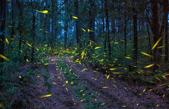 Ejido Santa Rita Sanctuary firefly sanctuary, Tlahuapan, Puebla
