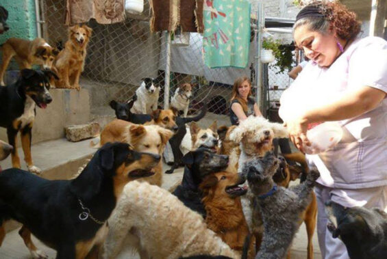 National Network for Assistance to Animal Shelters