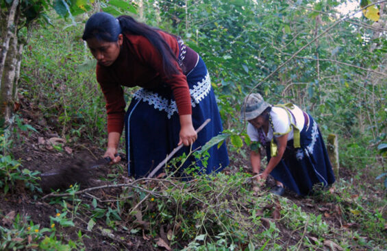 Coffee growers in Amaquil, Chiapas