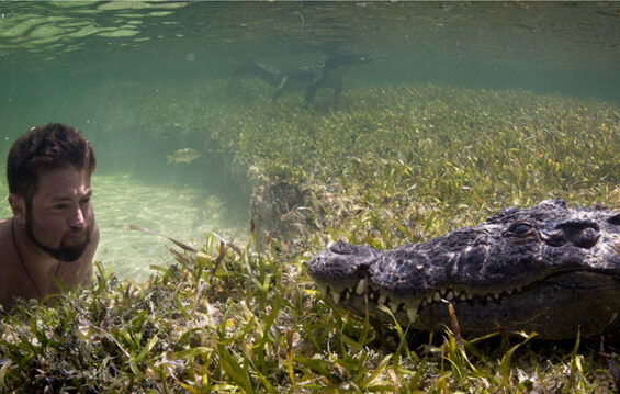 Forrest Galante interacting with crocodiles in Mexican waters