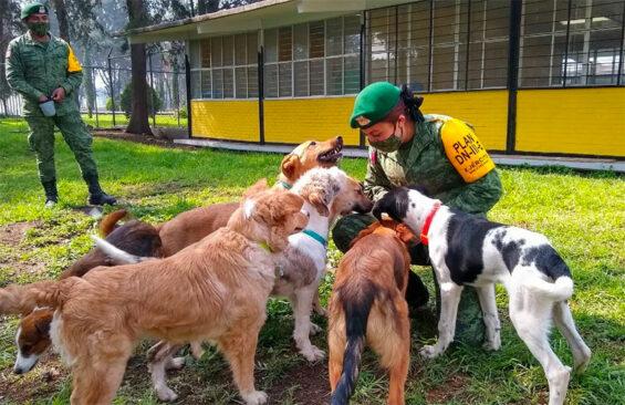 The army's dog shelter at Santa Lucía.