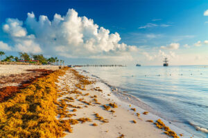 Beaches in Quintana Roo have been inundated by massive amounts of sargassum seaweed.
